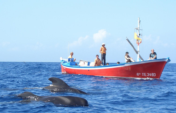 respektvollles whale watching mit oceano