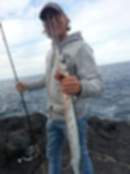 Hornhecht auf La Gomera gefangen
