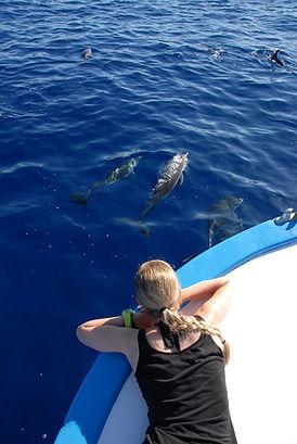 Delfine ganz nahe am Whale Watching Boot