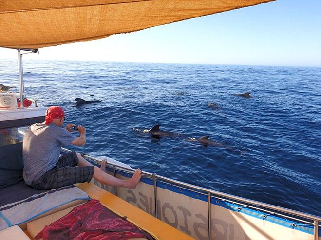 Gäste beobachten Wale und Delfine