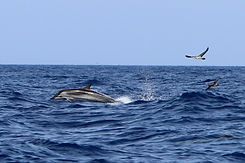 blau weisser delfin la gomera