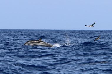 Blau Weisser Delfin