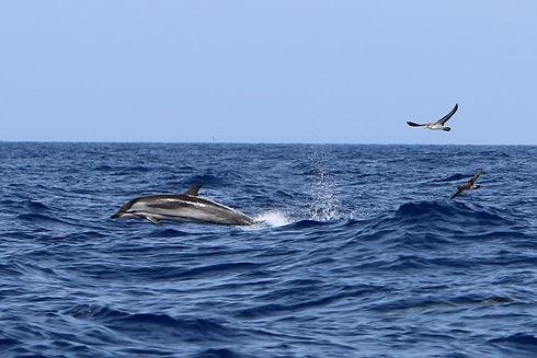 blau-weisser-delfin-la-gomera.jpg