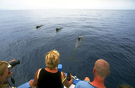 Frau beobachtet Delfine im Wasser