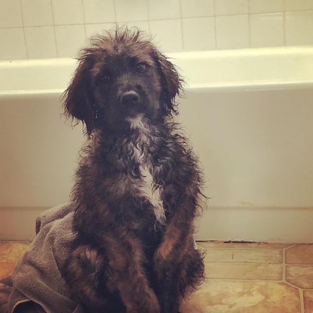 Bear 1st Bath.jpg