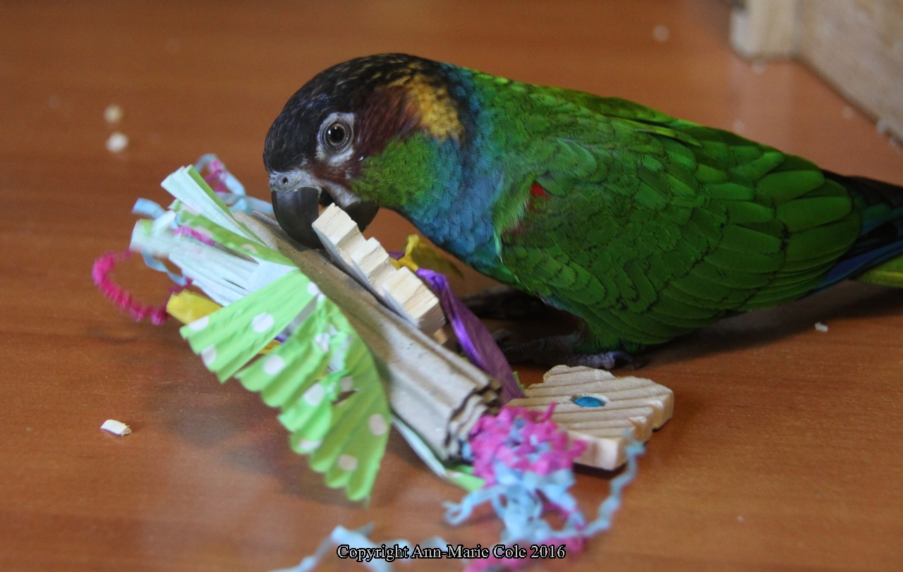 Shakespeare- Party Time foot toy