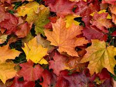 Autumn Lesson