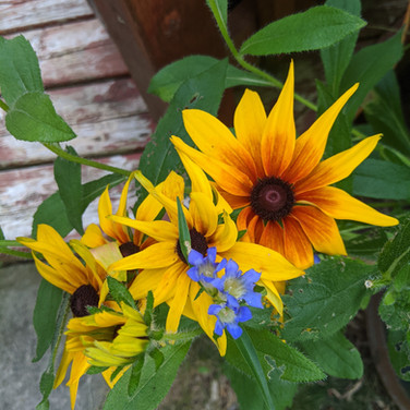 Yellow and Blue Flowers