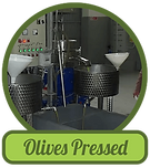 olives-pressed.png