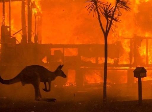 EL ECOCIDIO YA NO TIENE RETORNO Cultura y naturaleza en el siglo XXI y el apocalipsis cercano