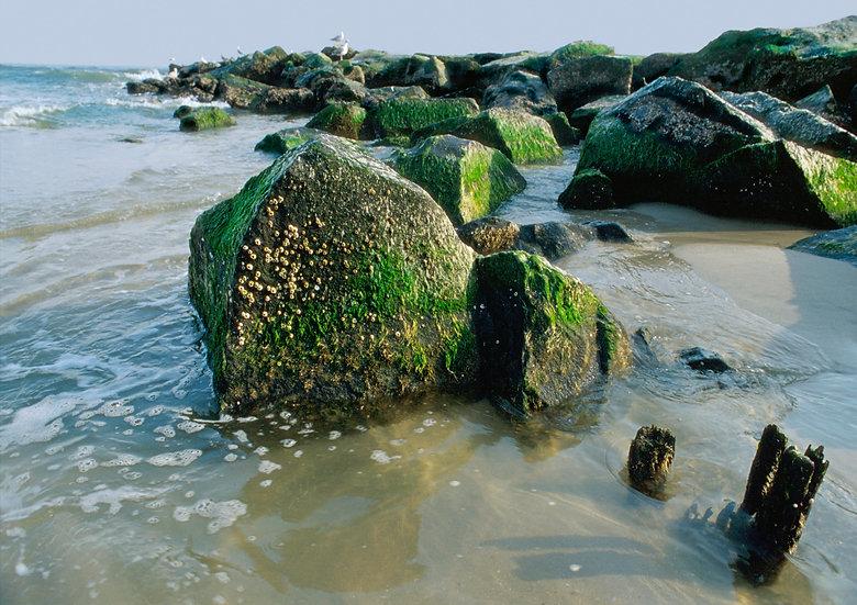 OCEAN CITY ROCKS