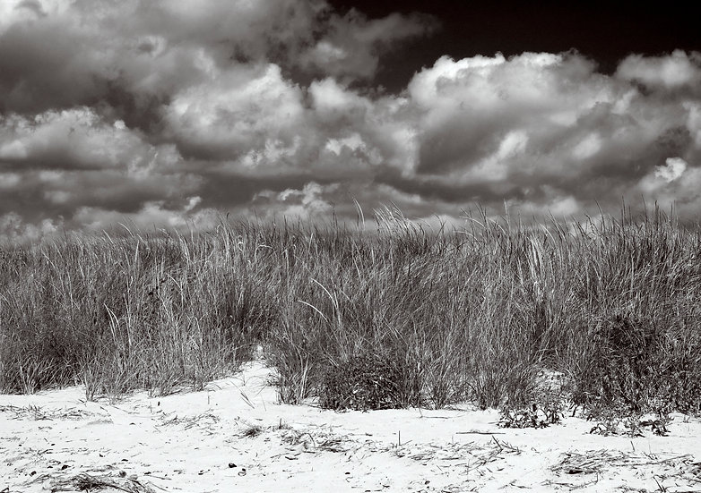 Dune Grass and Storm Clouds in Black and White, Somers Point NJ