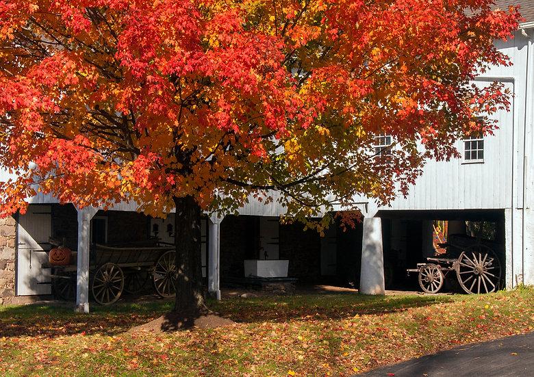 Bucks County Farm in Autumn, Bucks County, PA