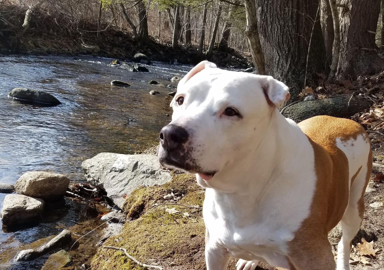 "Bella - The ""Chubby Dog"""