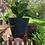 Thumbnail: Maceta Petunia