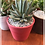 Thumbnail: Maceta Cactus