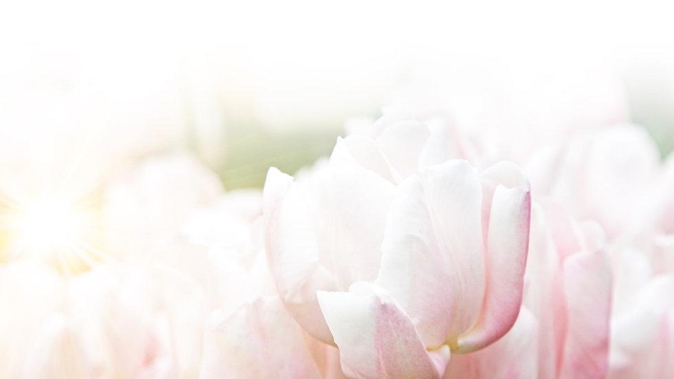 Rose Background.jpg