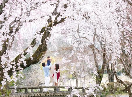 4/4(sat) 桜撮影会の開催のお知らせ