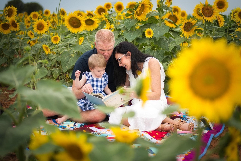 Sunflower Minis - Mid September