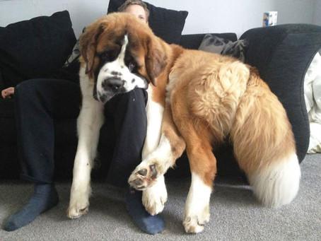 Hond op een appartement: yay or nee