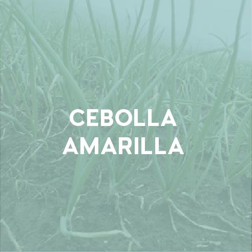Cebolla Amarilla.png