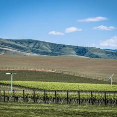 Les Collines Vineyard, Walla Walla, Washington