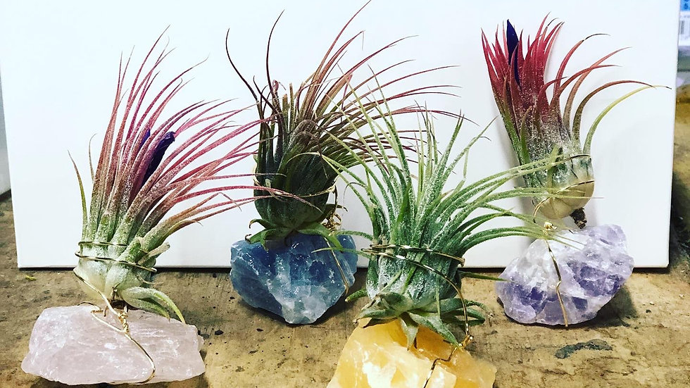 Succulent air plant medium