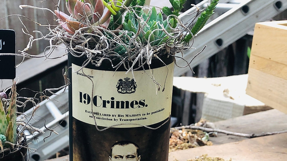 Succulent Wine Bottle