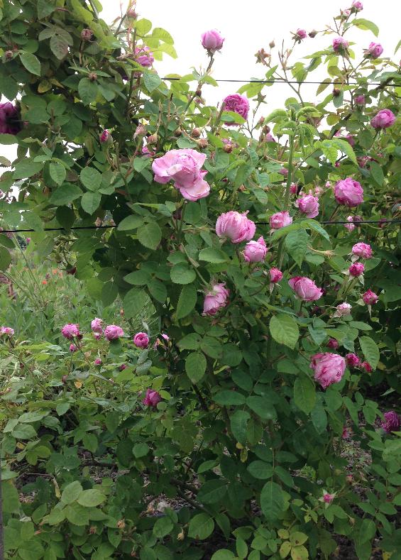 Fleurs-exceptionelles.JPG
