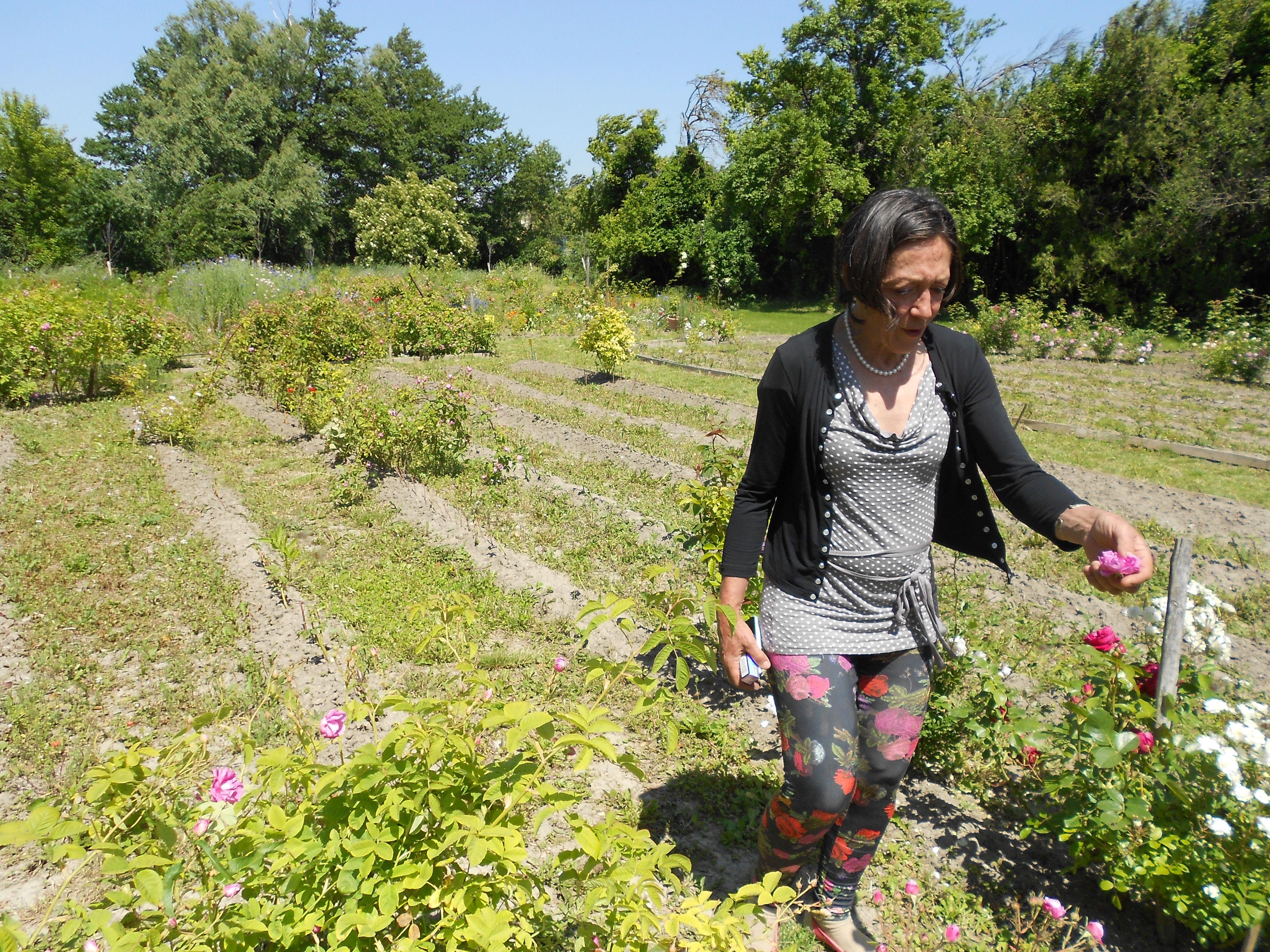 Visite-guide-Rose-des-Arts.JPG