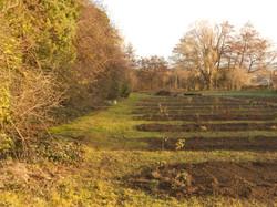 Plantations-Baptistine.jpg