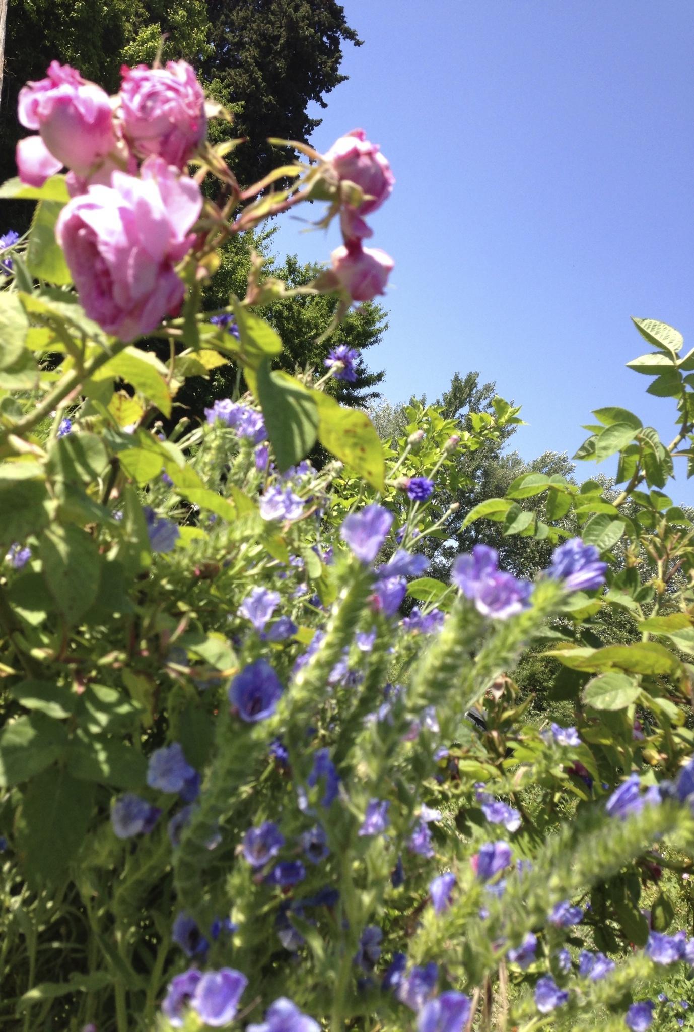 Biodiversite-Provence.jpg
