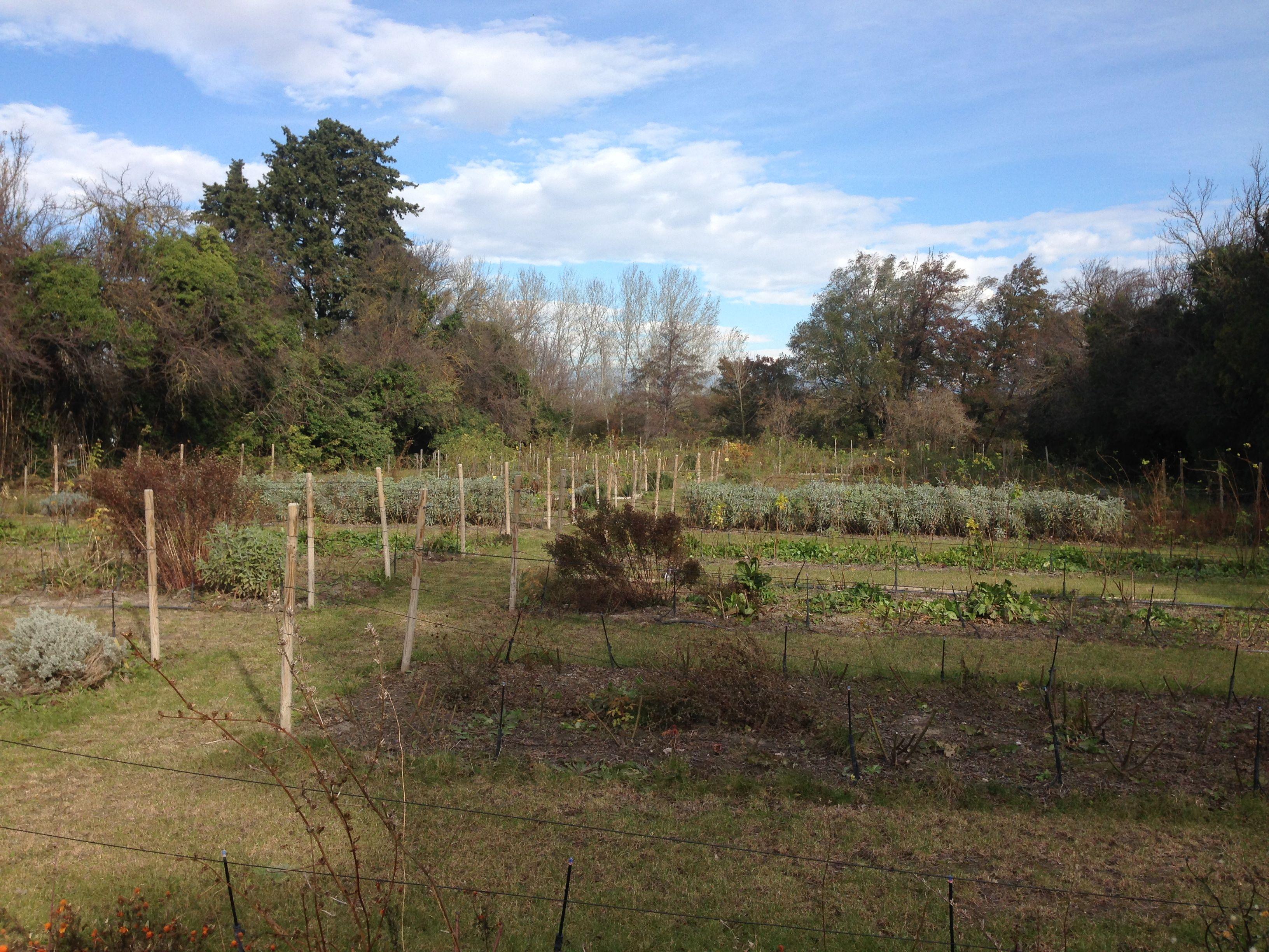Jardin-en-Provence.jpg