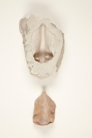 Prothèse petit nez