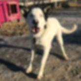Douggie (1).jpg