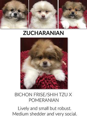 Zucharanian