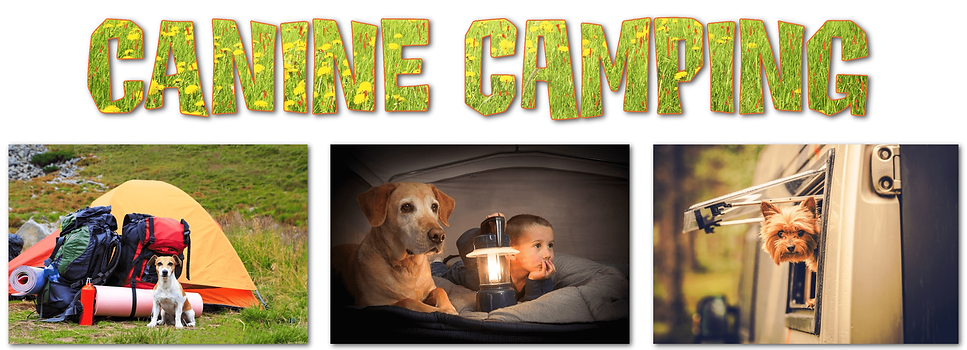 The top dog store camping with dogs