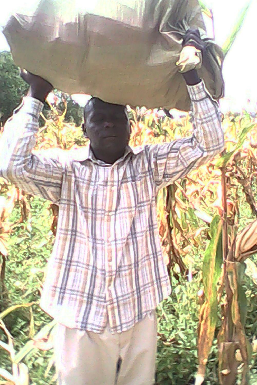 Maize Harvest - Transport