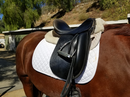 Saddle Shopping 101 - How to Find a Quality Used Dressage Saddle