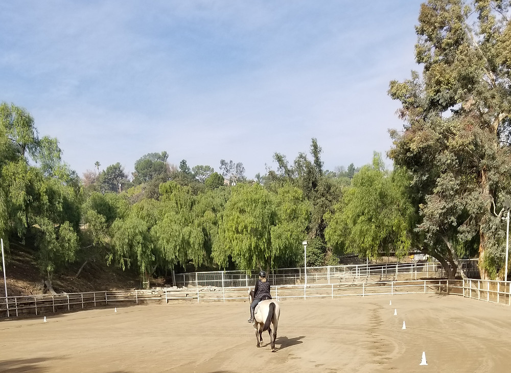 Laura Goodenkauf Dressage, Dressage horse, Monte Verde Ranch, Los Angeles, CA
