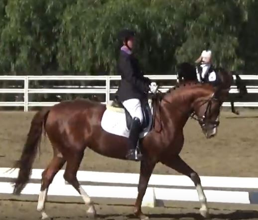 Dressage Horse, Mission Pacific, Los Angeles, California