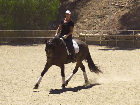 How to Teach Your Horse to Leg Yield