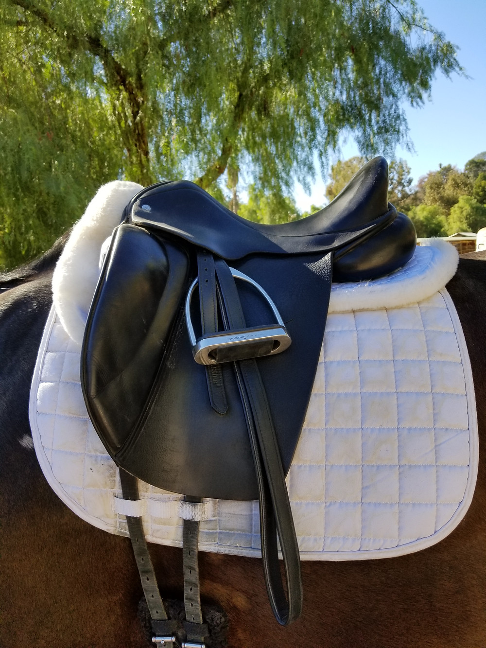 Custom Dressage Saddle at Laura Goodenkauf Dressage in Los Angeles California