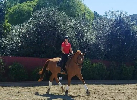 How to Teach Your Horse to Move Off the Inside Leg with Serpentines