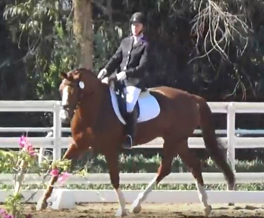 Dressage Horse at Mission Pacific Dressage Show.