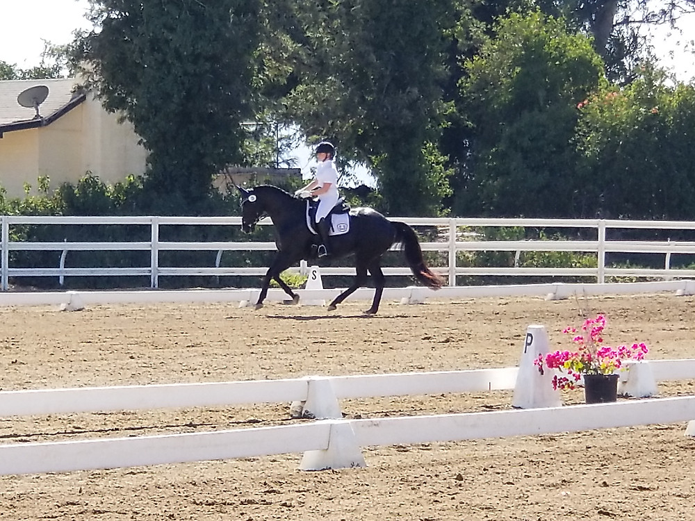Sarah and Special Blessing, Trakehner horse, Training Level and First Level Dressage Show