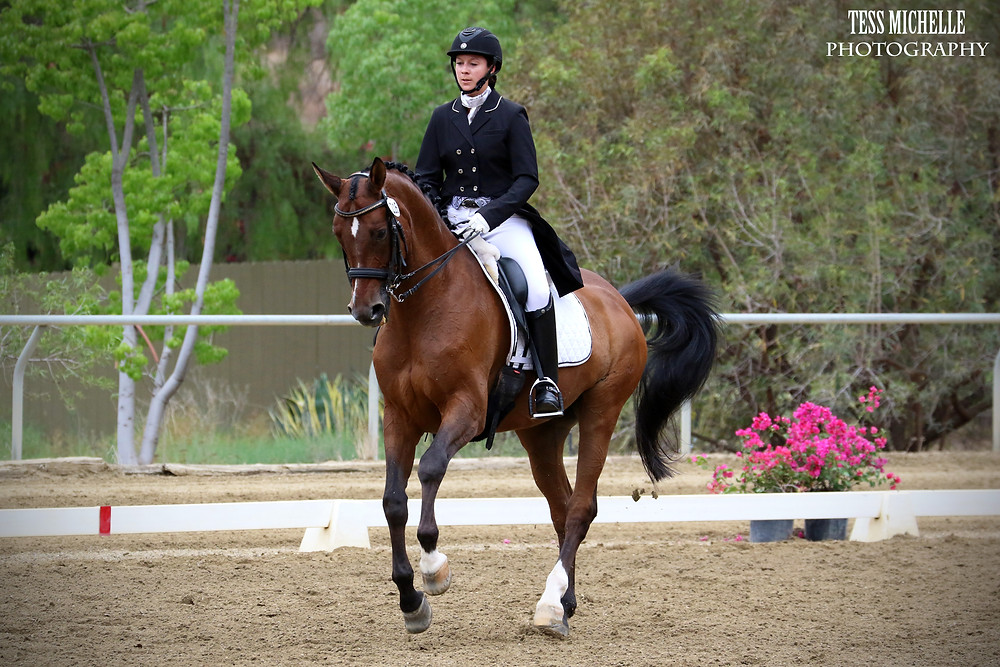 Prix St Georges Dressage Horse and FEI Trainer in Los Angeles California