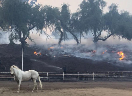 Evacuating your Horse from a Wild Fire