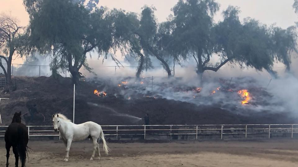 Horses and wildfire in the Creek Fire in Los Angeles, 2017.