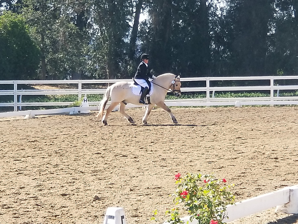 Bobbie and Butters, Norwegian Fjord, Dressage Show, Training Level